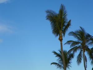 What more could you want: blue skies and palm trees, a balmy night and good music.