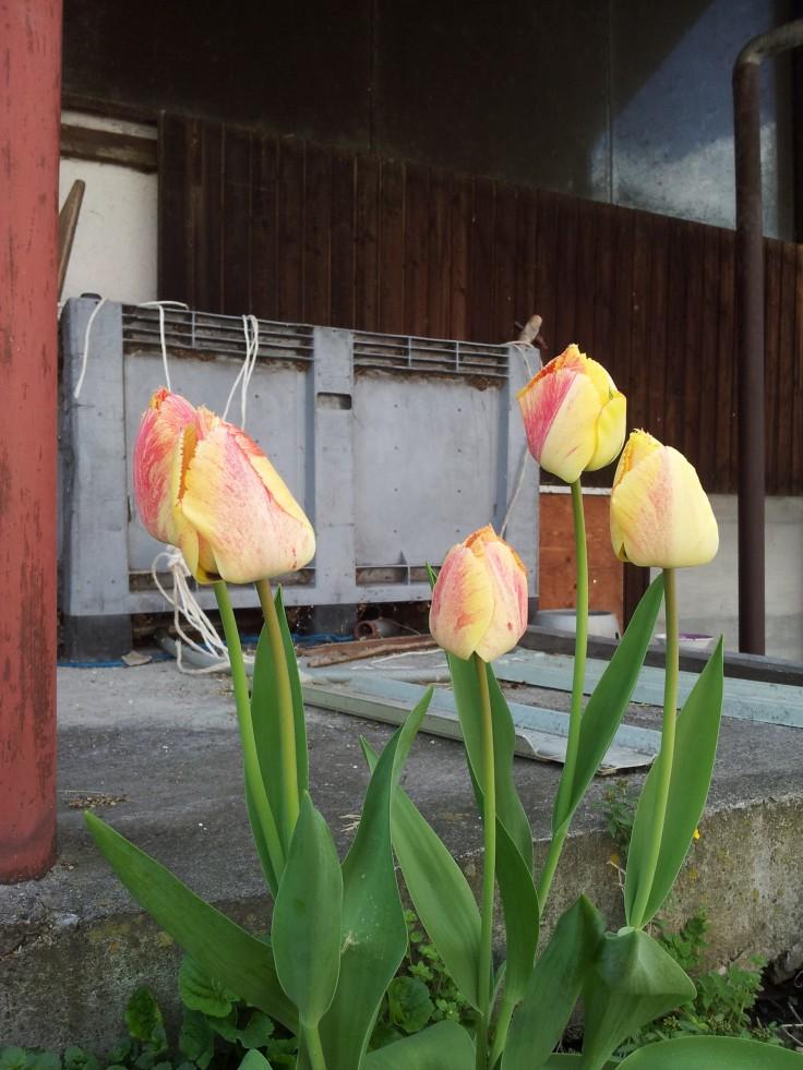 wpid-2015-04-18-16.27.20.jpg.jpeg