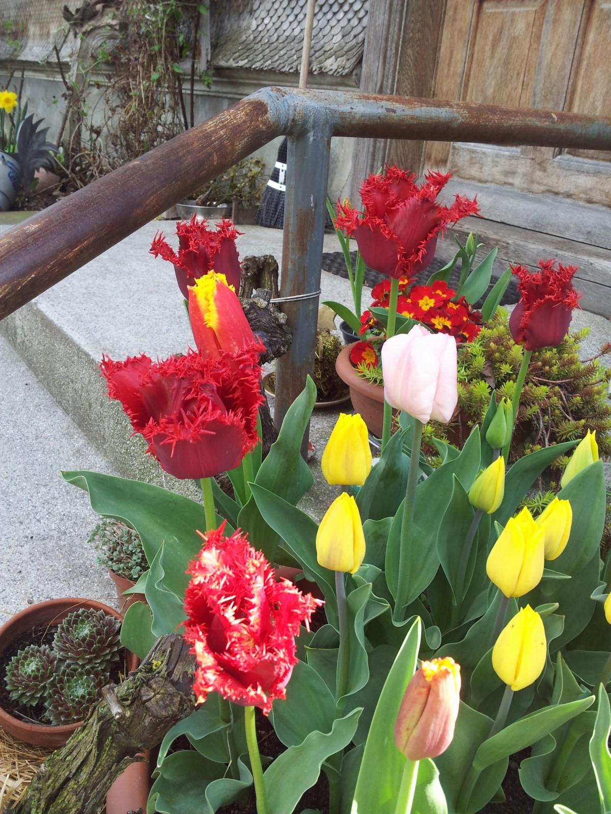 wpid-2015-04-18-16.28.18.jpg.jpeg